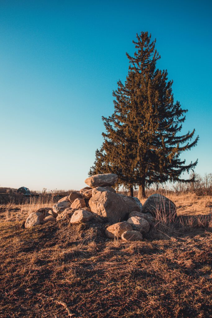 Think of evergreen content like an evergreen tree staying lush season after season